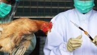 أعراض انفلونزا الطيور وأهم طرق العلاج .. وما هي الأسباب التي تؤدي للإصابة به