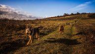 طرق حماية الحيوانات المهددة بالانقراض