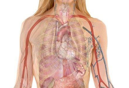 غدد في الجسم وظيفتها إفراز الهرمونات