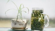 التداوي بالاعشاب .. فوائد واضرار التداوي بالاعشاب الطبية