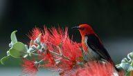 طائر الجنة