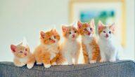 افضل اسماء قطط ذكور واناث