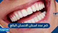 كم عدد اسنان الانسان البالغ