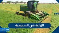 الزراعة في السعودية .. وأهم المحاصيل الزراعية في المملكة
