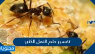 تفسير حلم النمل الكثير