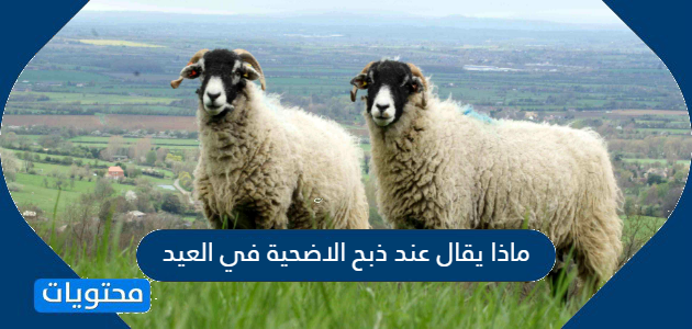 ماذا يقال عند ذبح الاضحية في العيد