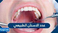 كم عدد الاسنان الطبيعي للإنسان