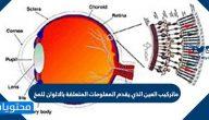 ماتركيب العين الذي يقدم المعلومات المتعلقة بالالوان للمخ