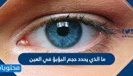 ما الذي يحدد حجم البؤبؤ في العين
