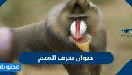 اسم حيوان بحرف الميم م