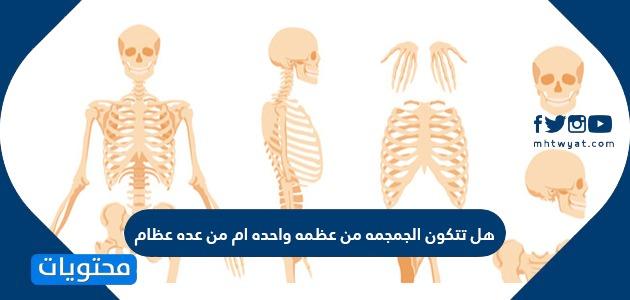 هل تتكون الجمجمة من عظمة واحدة أم من عدة عظام