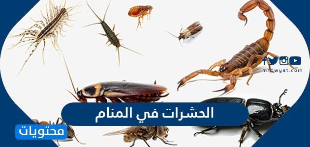 تفسير حلم الحشرات في المنام للعزباء والحامل والمتزوجة والرجل