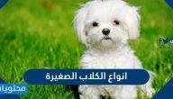 أفضل انواع الكلاب الصغيرة وأسمائها بالصور