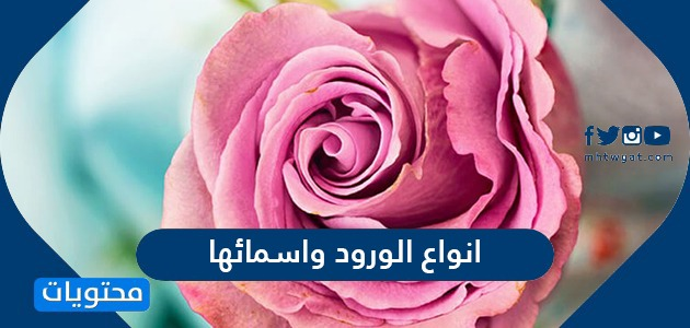 انواع الورود واسمائها بالعربي والانجليزي بالصور جميلة جدا موقع محتويات