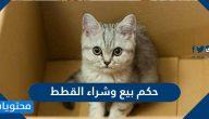 حكم بيع وشراء القطط في الاسلام