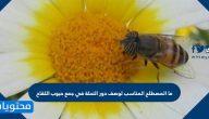 ما المصطلح المناسب لوصف دور النحلة في جمع حبوب اللقاح