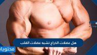 هل عضلات الذراع تشبه عضلات القلب