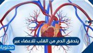 يتدفق الدم من القلب للاعضاء عبر