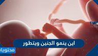 اين ينمو الجنين ويتطور وما هي مراحل نمو الجنين خلال فترة الحمل