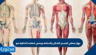 جهاز يعطي الجسم الشكل والدعامة ويحمي اعضاءه الداخلية هو