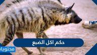 حكم اكل الضبع وحكم اكل التمساح