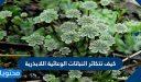 كيف تتكاثر النباتات الوعائية اللابذرية