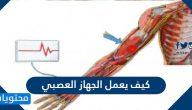 كيف يعمل الجهاز العصبي وما هي وظائفه وامراضه وطرق الوقاية منها