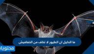 ما الدليل أن الطيور لا تخاف من الخفافيش
