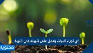 اي اجزاء النبات يعمل على تثبيته في التربة