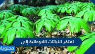 تفتقر النباتات اللاوعائية إلى