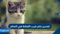 تفسير حلم ضرب القطط في المنام