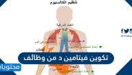 تكوين فيتامين د من وظائف وما اهميته لجسم الانسان