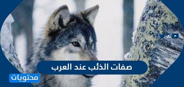 صفات الذئب عند العرب
