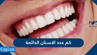 كم عدد الاسنان الدائمة وما الفرق بينها وبين الاسنان اللبنية
