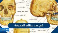 كم عدد عظام الجمجمة