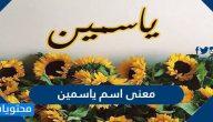 معنى اسم ياسمين وصفات حاملته وحكم تسميته في الإسلام