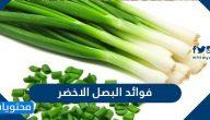 فوائد البصل الأخضر للاطفال والرجال والنساء