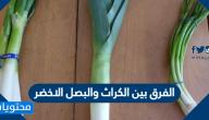 الفرق بين الكراث والبصل الاخضر وأهم 8 فوائد صحية للبصل الأخضر