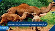 في أي نمط من السلوك ينهمك الحيوان الذي يحل المشكلات