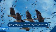 كم عدد الطيور التي امر الله ابراهيم بتوزيعها على الجبل