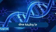 ما وظيفة dna وما مكوناته واستخداماته وما الفرق بينه وبين RNA