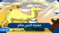 ما هي معجزة النبي صالح