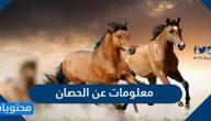 معلومات عن الحصان الجسدية والتاريخية