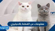 معلومات عن القطط بالانجليزي مع الترجمة