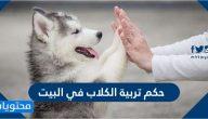 حكم تربية الكلاب في البيت