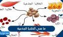 ما هي الخلايا الجذعية ودور الخلية الجذعية في علاج الأمراض