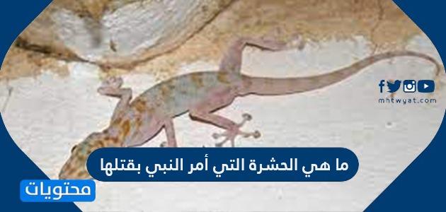 ما هي الحشرة التي أمر النبي بقتلها