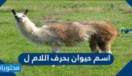 اسم حيوان بحرف اللام ل